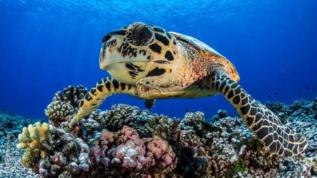 Cd voyages et rencontres a tahiti