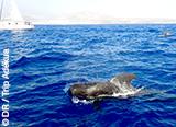 A la rencontre des merveilles de Ténérife par la mer, la terre ou les airs ! - voyages adékua