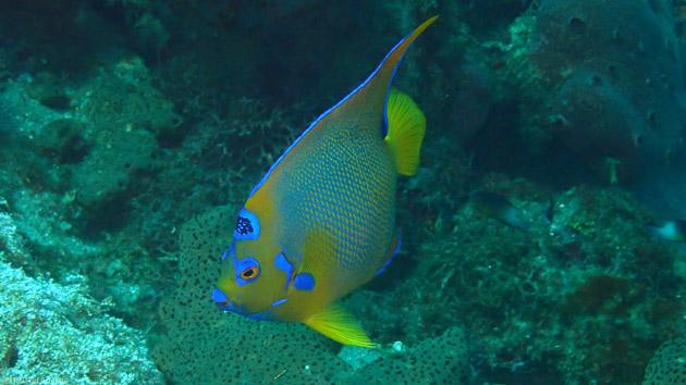 Découvrez les plus beaux sites de plongée de la Dominique