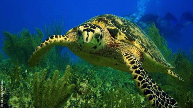 réserve de tortues au Vietnam