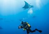 Les Açores, un petit paradis pour la plongée - voyages adékua