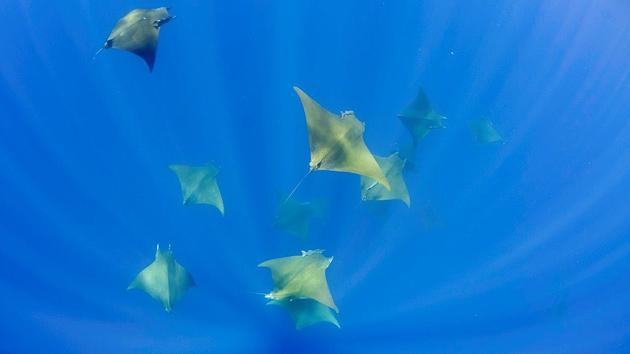 8 immersions pour découvrir les fonds-marins des Açores