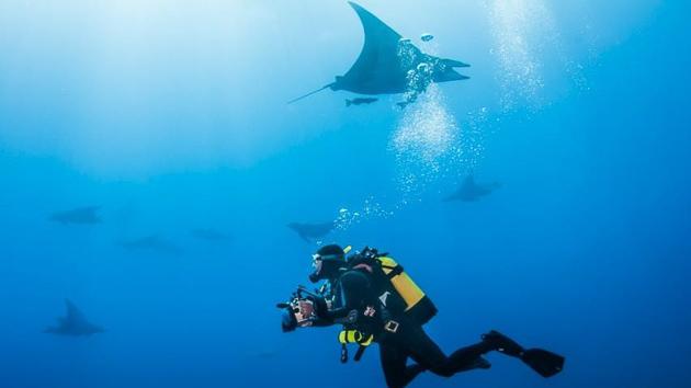 Plongez avec les raies mantas pendant vos vacances aux Açores