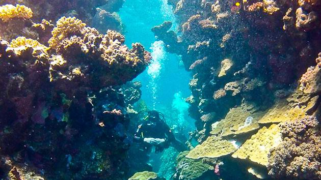 Venez découvrir les fonds marins de El Quseir en Egypte