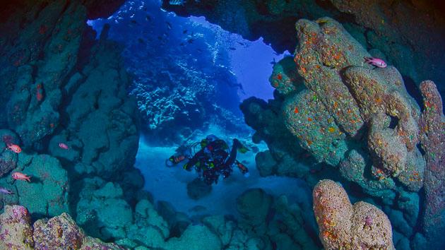 Découvrez le House Reef en mer Rouge avec ce séjour plongée unique