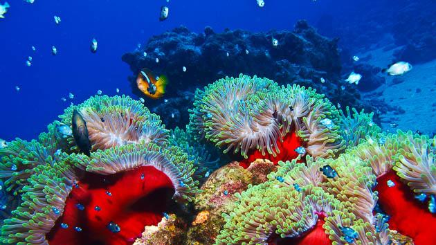 Votre séjour plongée all inclusive en mer Rouge