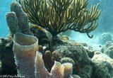 Hors de l'eau, à la découverte du Belize - voyages adékua