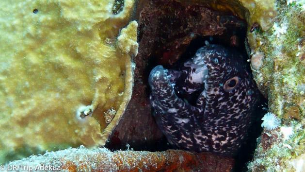 Venez plonger à la découverte des fonds marins du Belize