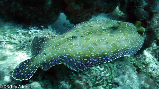 Observez les plus belles espèces des fonds marins du Belize