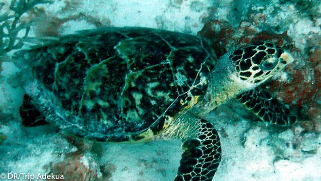 Plongez en mer des Caraïbes pendant votre séjour au Belize