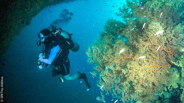 Les plus belles plongées des Visayas pour ce séjour luxe aux Philippines