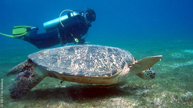 Découvrez la richesse de la faune sous-marine des Visayas