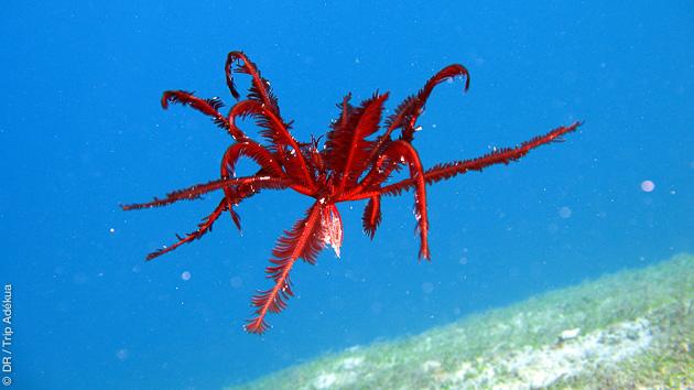 Découverte de la faune et la flore sous marine unique dans les eaux du Triangle de Corail aux Philippines