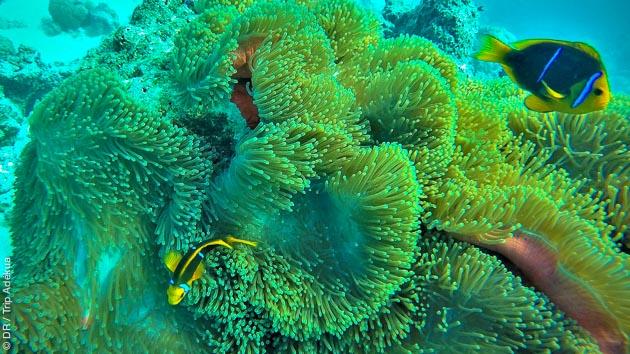 Admirez les plus beaux fonds de Polynésie