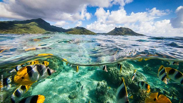 Snorkeling ou randonnée palmée sur les plus beaux récifs de Polynésie