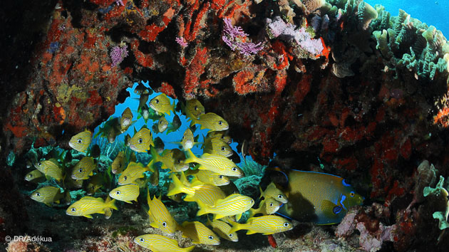 gros ou petits poissons à Playa del Carmen
