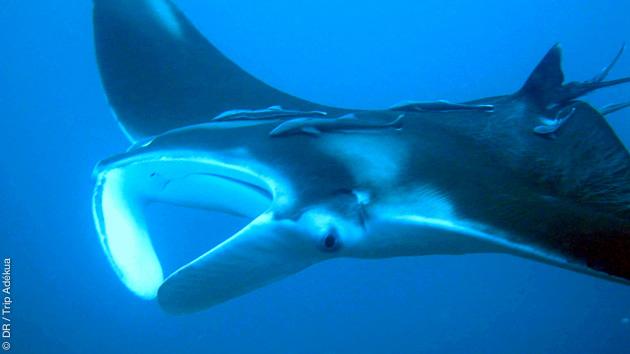 Splendides plongées sur les spots de Tobago