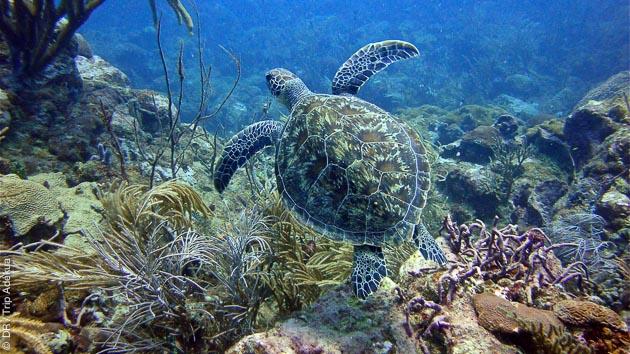 Une faune riche et variée à observer pendant vos plongées à Tobago
