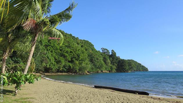 Tobago, une petite île des Caraïbes, idéale pour un séjour plongée authentique
