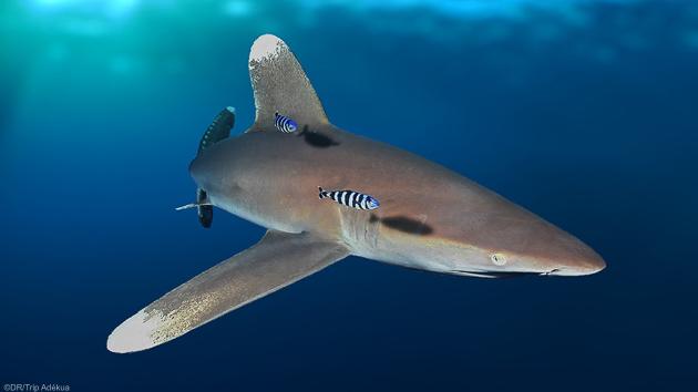 Plongez à la découverte des plus belles espèces de mer Rouge