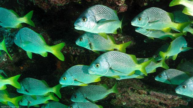 Venez plonger dans les eaux des îles Galapagos en Equateur