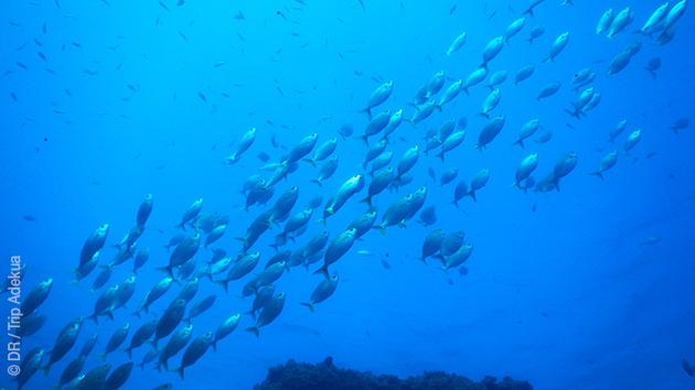 Un séjour plongée et détente sur les plus beaux spots des iles Canaries,