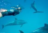 Découvrez la Mer Rouge dans un cadre idyllique à Safaga - voyages adékua