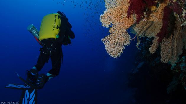 plongée sur le reef à Soma Bay