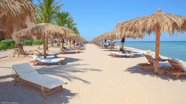 royal sur la plage après vos immersions en Egypte