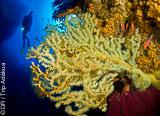 Au programme de votre séjour plongée à Ustica : Méditerranée et eau tiède - voyages adékua