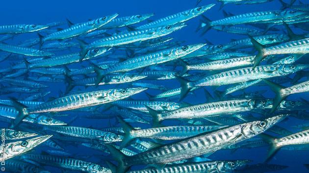 De belles rencontres lors de vos plongées à Ustica
