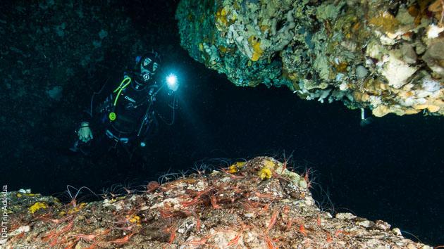 Les richesses de la Méditerranée : grotte, faune et flore à découvrir en plongée