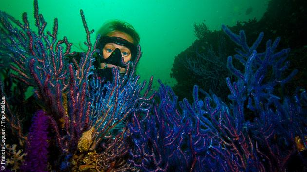 Superbes plongées muck dive au Sultanat d'Oman, dans le Musandam