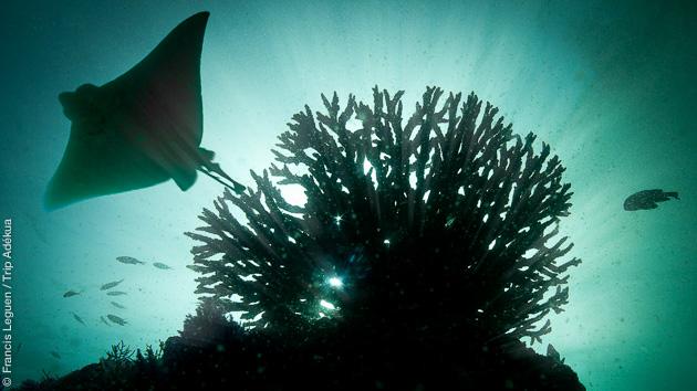 Rencontres magiques sous marines, entre pélagiques et poissons tropicaux sur les fonds du Musandam, à Oman