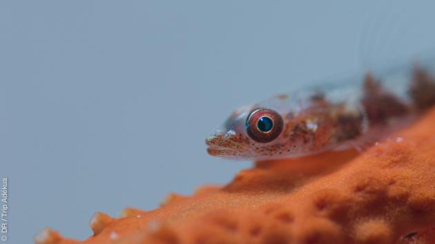 Une biodiversité extraordinaire à découvrir lors de ce séjour plongée muck dive dans le Musandam (Sultanat d'Oman)