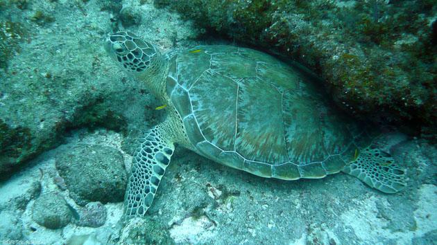 Découvrez les fonds marins de Bonaire dans les Caraïbes