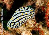 L'Océan Indien: une explosion de couleurs et de biodiversité - voyages adékua