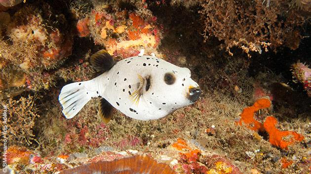 Petits ou gros poissons, dans les coraux ou sur des tombants, vous découvrirez les trésors des eaux du Mozambique pour ce séjour plongée