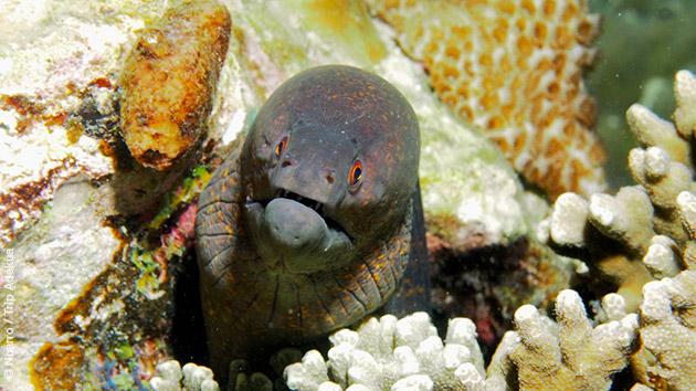Une faune sous-marine diversifiée et colorée rencontrée lors de vos plongées au Mozambique