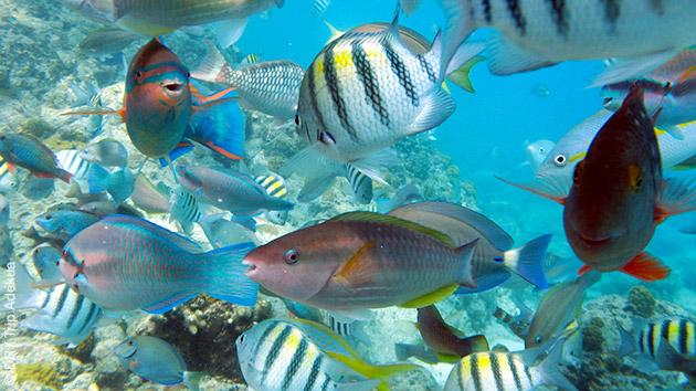 Plongées sur des récifs ou des tombants, selon votre niveaux : vous y verrez une faune sous-marine riche et colorée