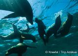 Vacances plongée de rêve au bord de la mer de Cortez - voyages adékua