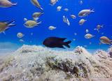 Du bord ou en bateau, votre forfait de 10 superbes plongées aux Canaries - voyages adékua