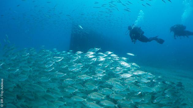 plongée sous-marine aux Canaries