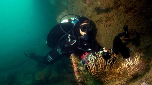 Plongez à la découverte des épaves des fonds marins autour de Lisbonne