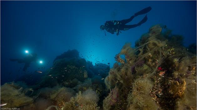 Découvrez les plus beaux sites de plongée de Tavolara en Sardaigne