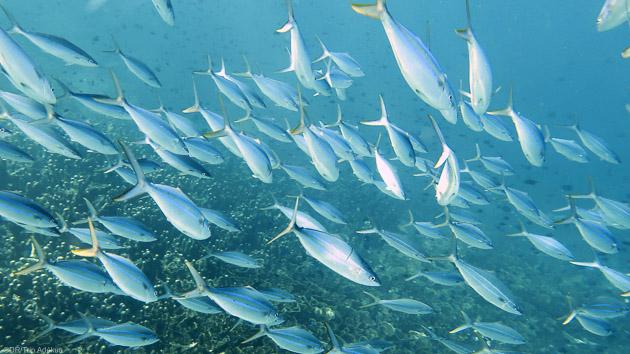 Vos plus belles immersions pour un sjéour plongée inoubliable