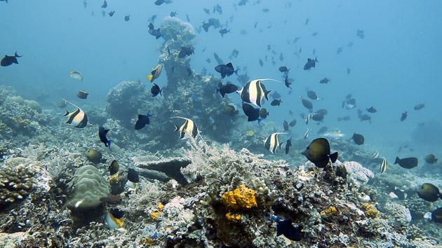 Découvrez la richesse des fonds de l'île de Sulawesi en Indonésie