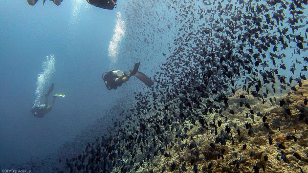 Votre séjours plongée avec 10 immersions à Bira en Indonésie