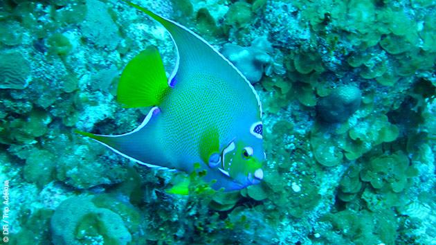 Initiez vous à la plongée en duo à Cat Island, et découvrez un monde aquatique tout en couleur !