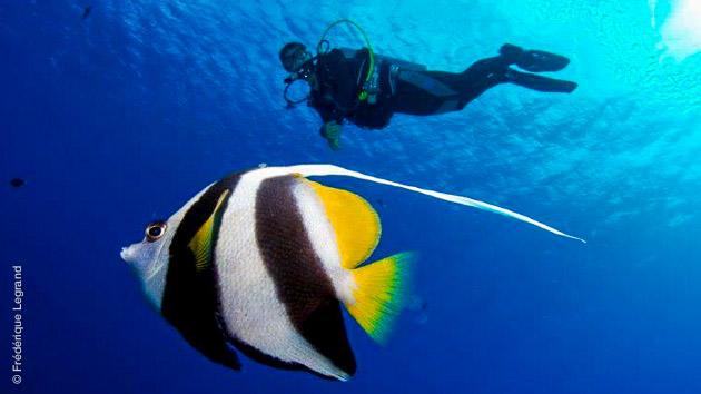 Des plongées mémorables sur les plus beaux sites de Polynésie, à la rencontre des baleines et des poissons multicolores